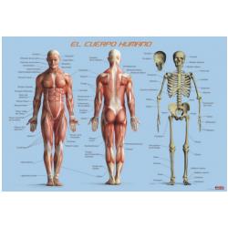 Pósters educativo El Cuerpo Humano